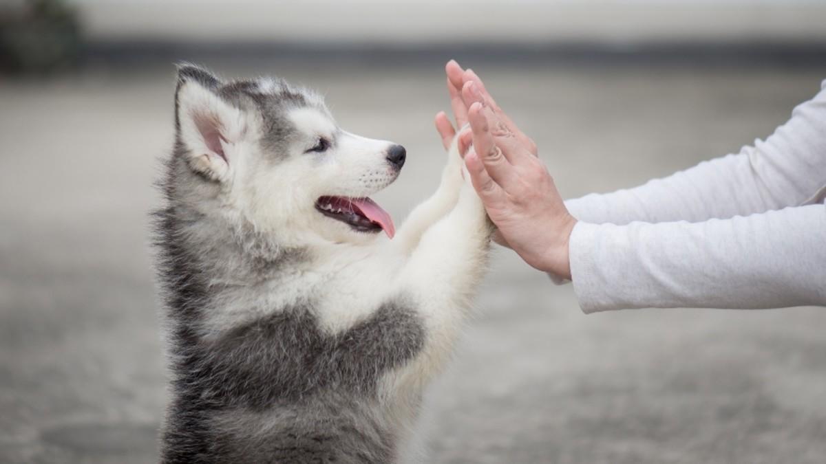 Get A Pet